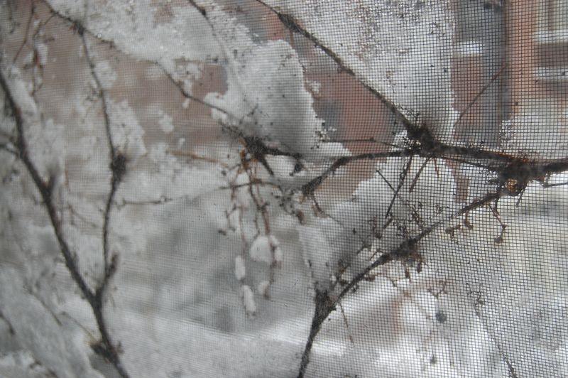 Snow window 022610