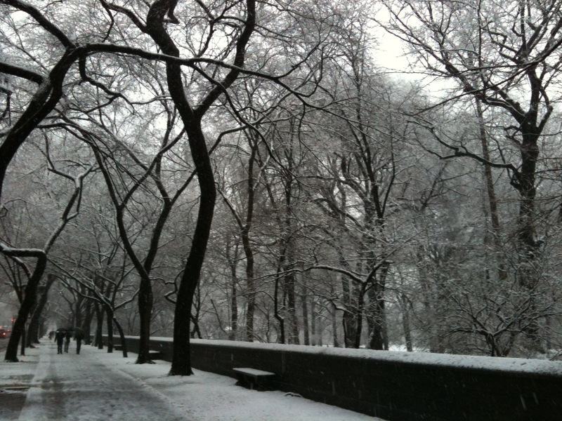 Snow by Central Park 022510