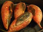 Roasted Sweet Potatoes (군고구마 - gun go gu ma)