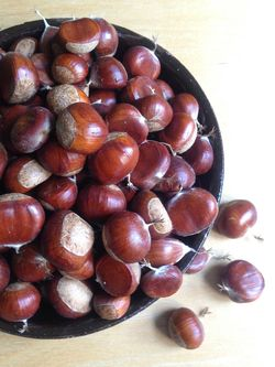 Very fresh chestnuts from @ Lee Orchard Garden