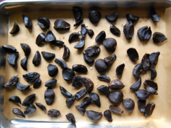 4) Drying peeled black garlic - on parchment for a week